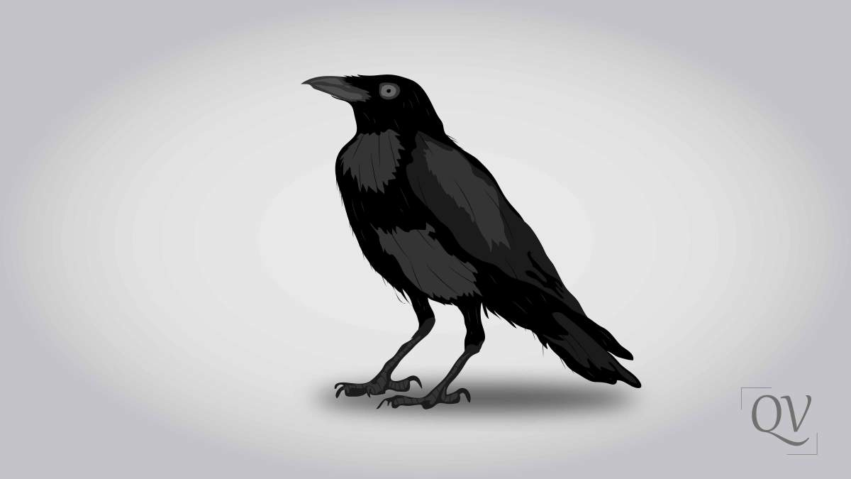 Crow - According to Quran