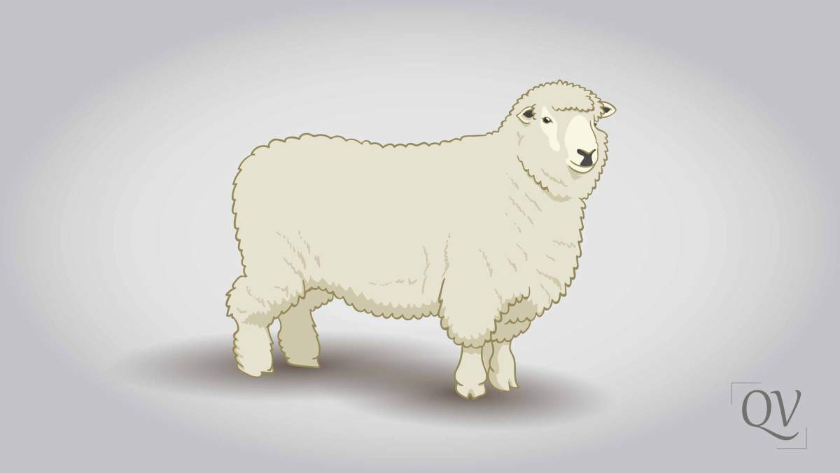 Sheep - According to Quran